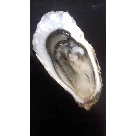 Fine Médaille d'Argent Paris 2017 / 50 huîtres N°4