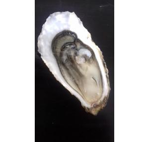 Fine Médaille d'Argent Paris 2017 / 50 huîtres N°2